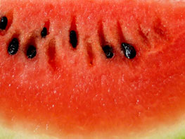 Watermelon at North Haven Gardens