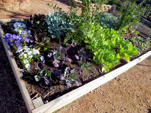 Raised Vegetable Bed Installation Service at North Haven Gardens