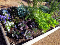 Raised bed installation service at North Haven Gardens