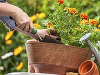 North Haven Gardens Potting and Repotting Service
