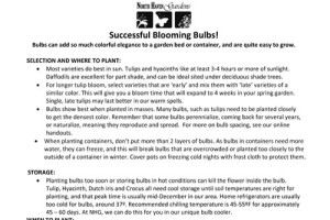 Tips for growing, planting and forcing bulbs