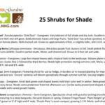 Top 25 Shrubs for Shade