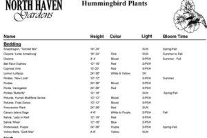 Hummingbird Plant List