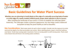 Water Plants How-To