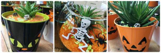 Halloween succulents & terrariums