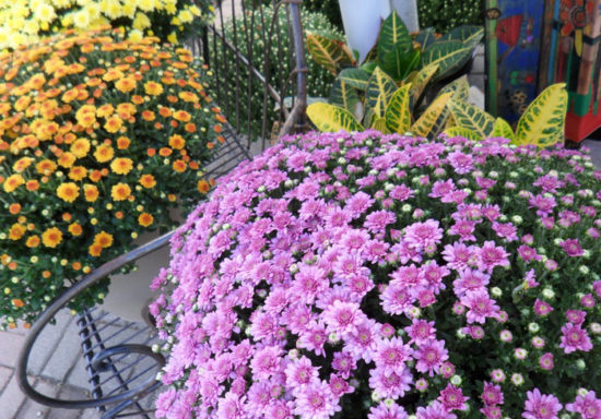 More mums!