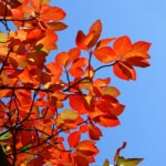 3 Trees to Plant for Spectacular Fall Color