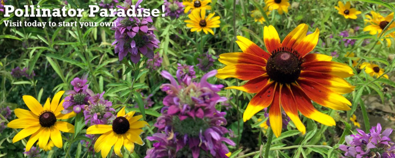 Pollinator Paradise at NHG