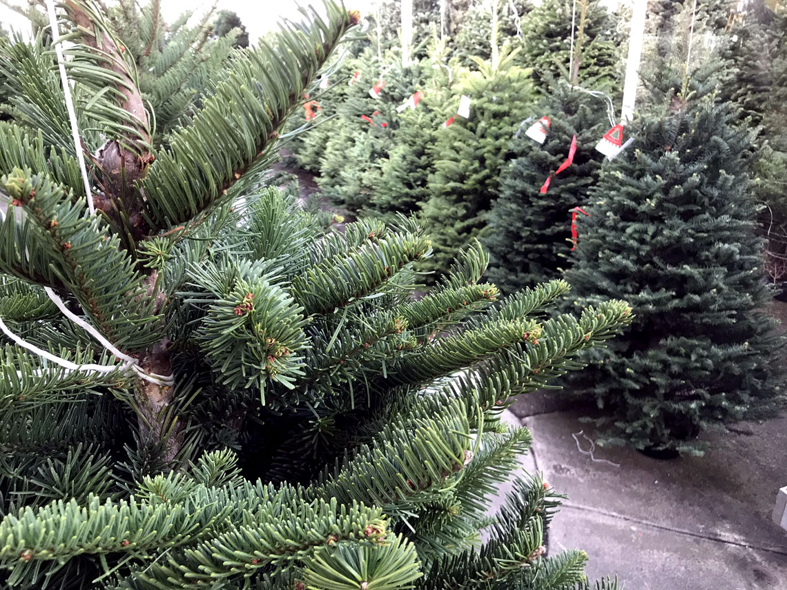 The very best fresh cut Christmas trees