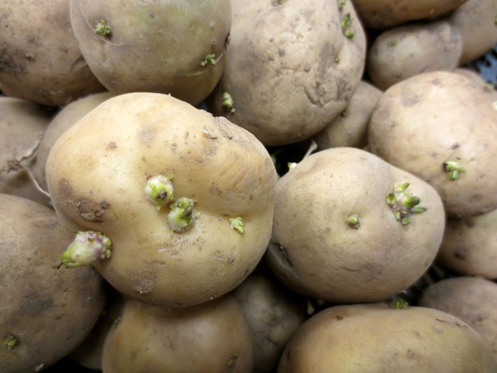 February Food Garden: Time For Potatoes And Asparagus