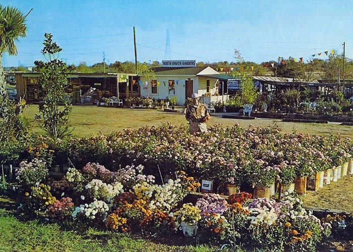 Roses at North Haven Gardens since 1951
