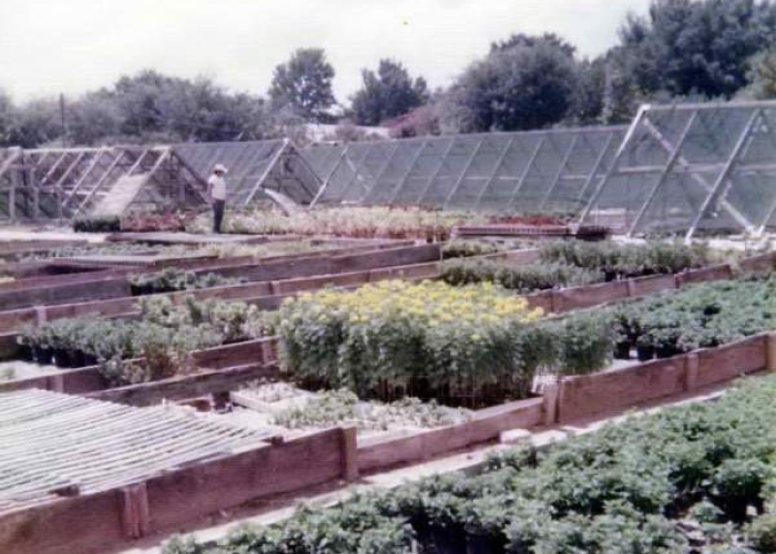 A-Frame Greenhouses 1961