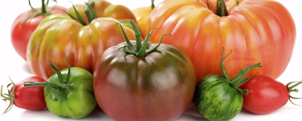 Heirloom tomatoes at North Haven Gardens
