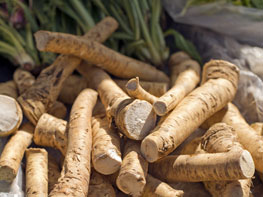 grow horseradish