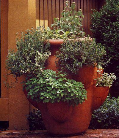Herbs: Easy, Fresh Flavor!