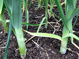Leek slips at North Haven Gardens