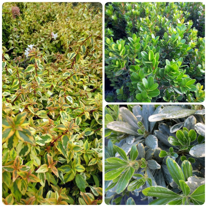 Shrubs at North Haven Gardens