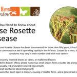 Rose Rosette disease