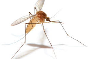 Natural Mosquito Control at NHG