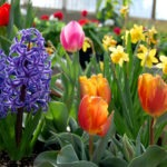 spring blooming bulbs