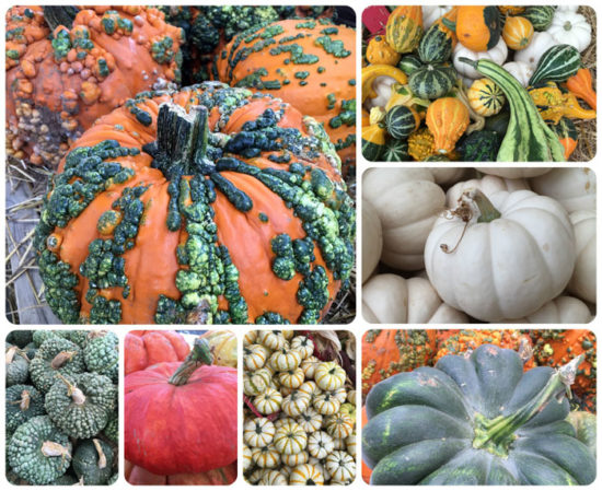 Specialty Pumpkins only $7.99 each
