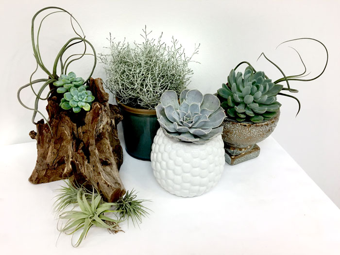 chic house plants