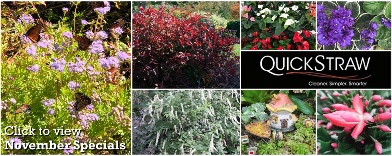 New Nov Specials Collage copy