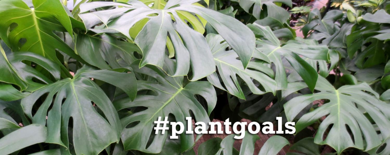plantgoals_0858