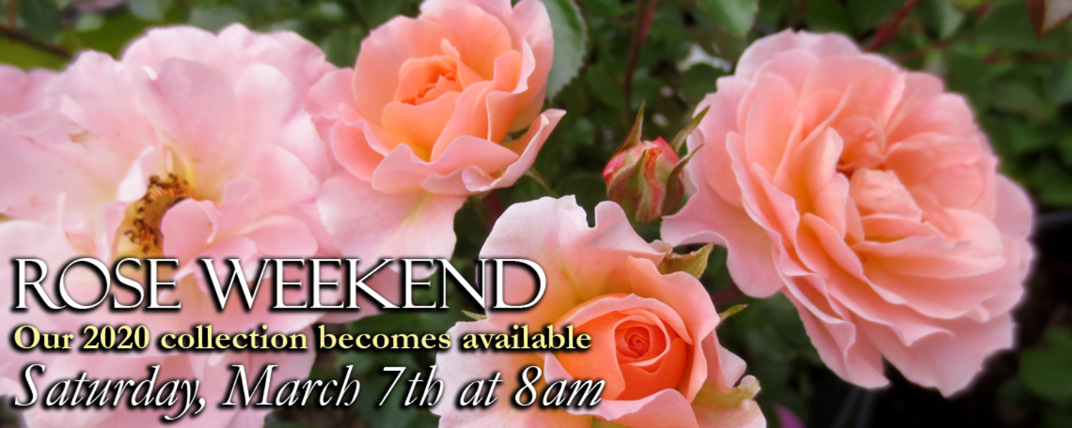 roseWeekend2019small copy