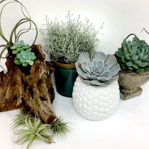 Chic Home Plant Kit