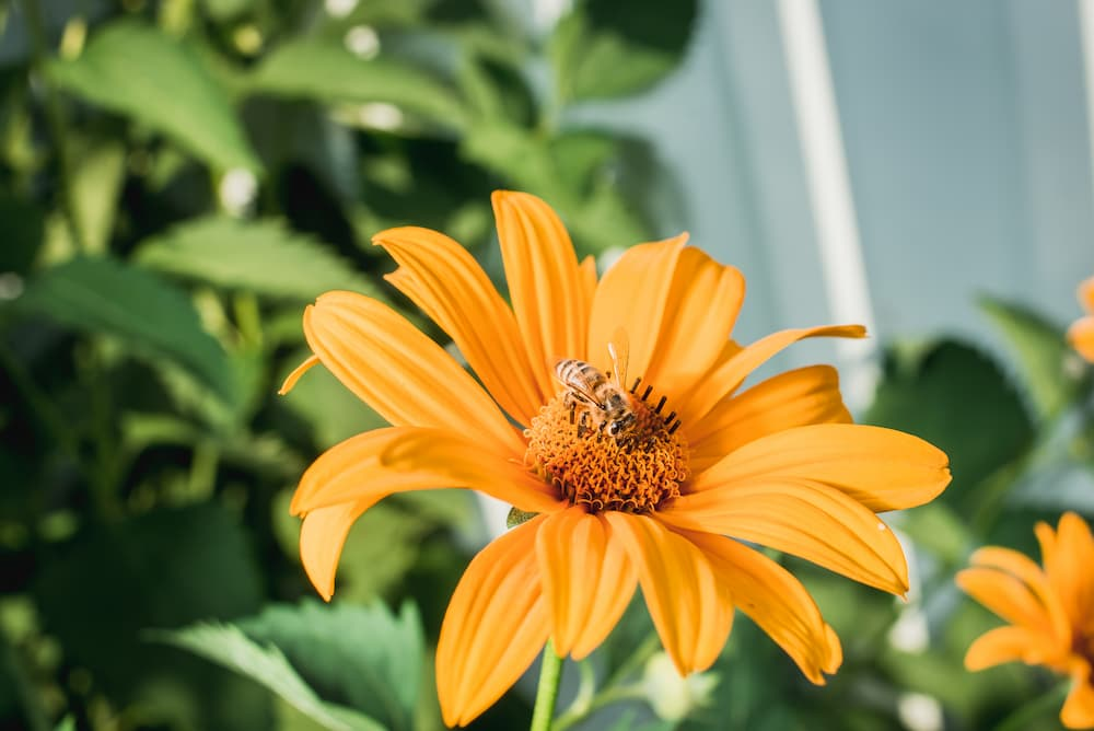 Close up photo of flower with a bee on it